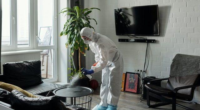 Control de plagas profesional