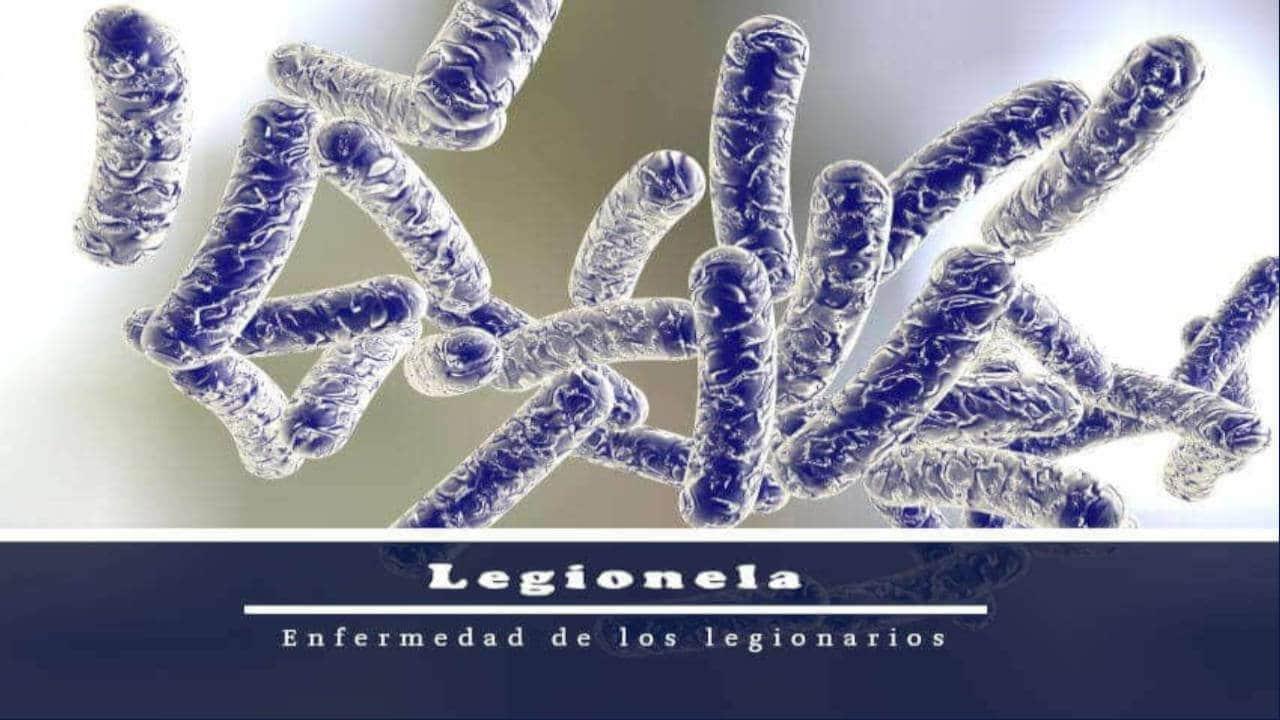 Legionela |  ¿Qué es y cuál es su tratamiento?
