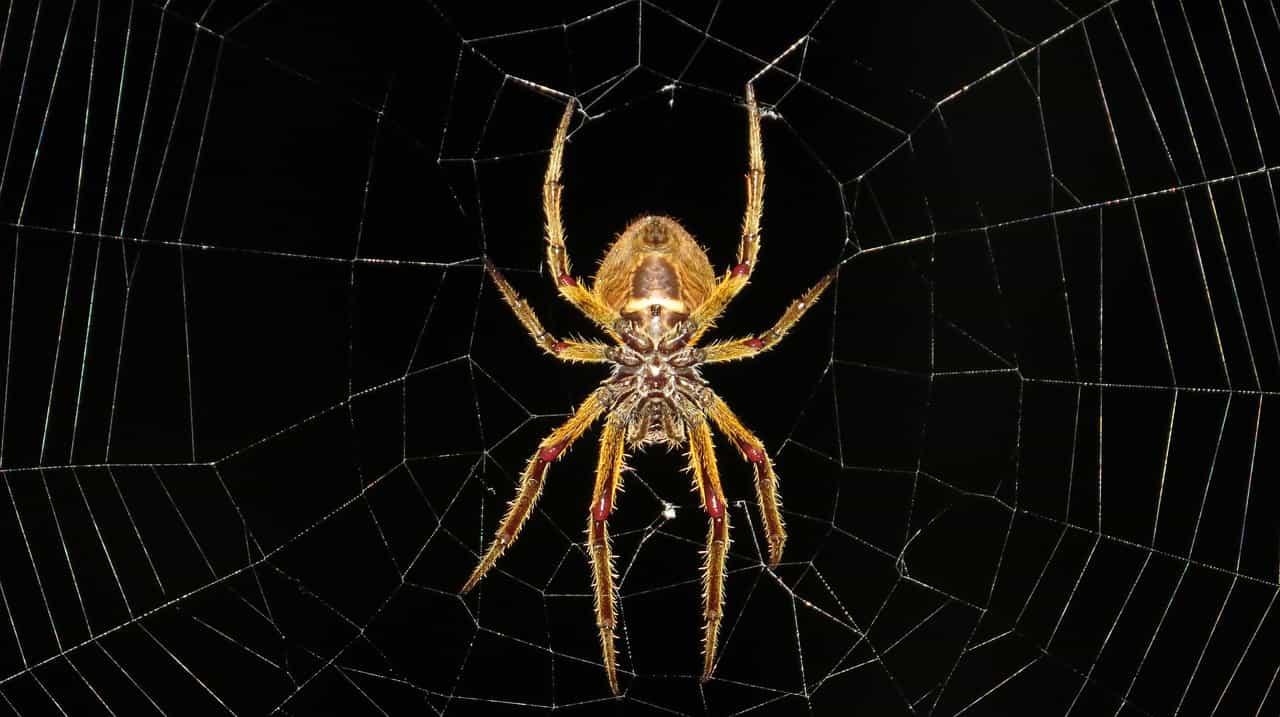 Algunos aspectos curiosos acerca de las arañas