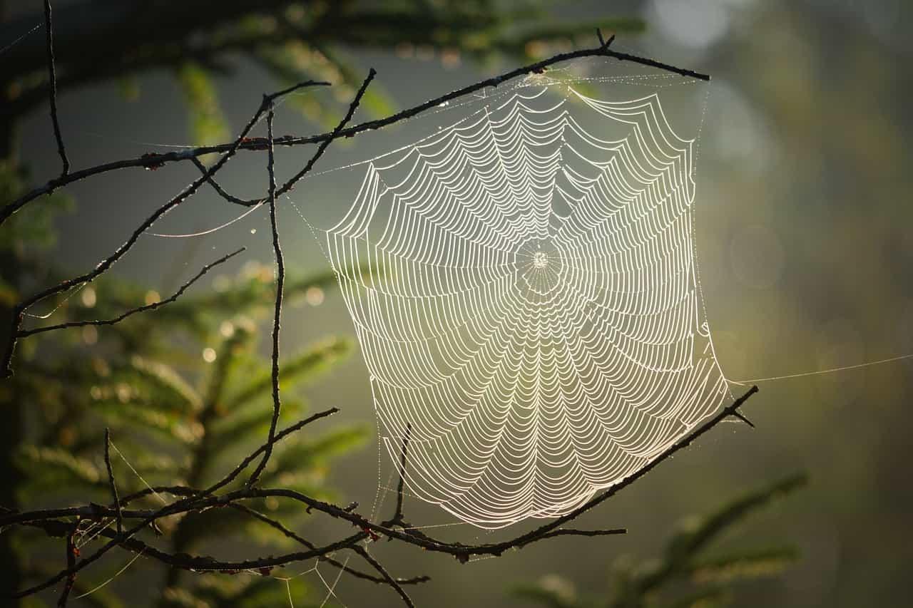 Cosas que no sabías sobre las arañas